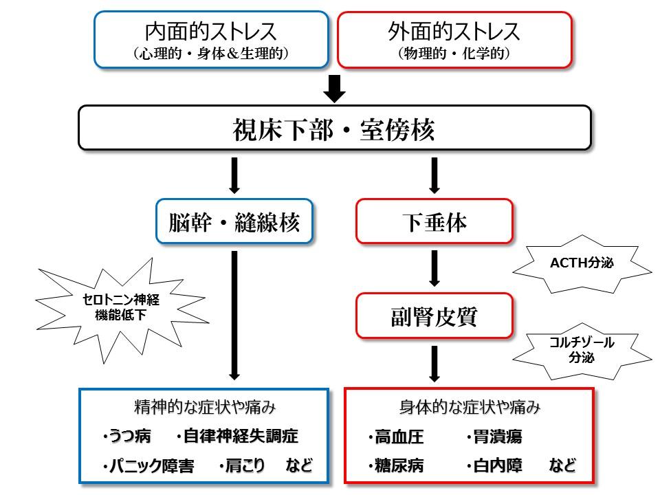 ストレス模式図